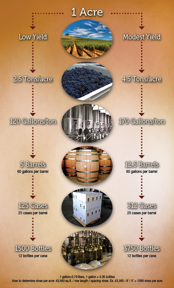 Pacifica Wine Division - Wine Metrics Infographic