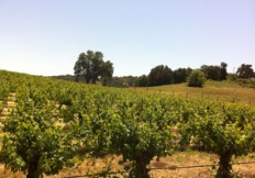 Vineyards for sale in Paso Robles, CA 93446