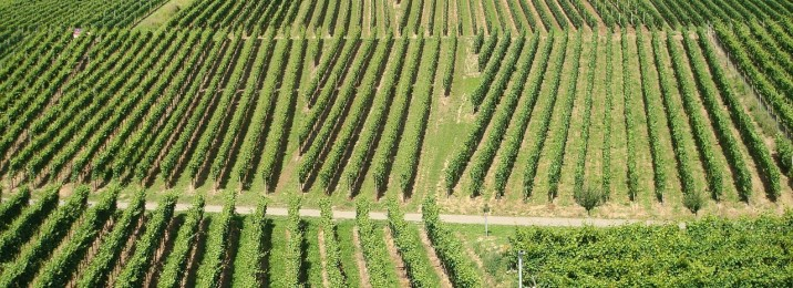 pacifica wine division - vineyard ownership