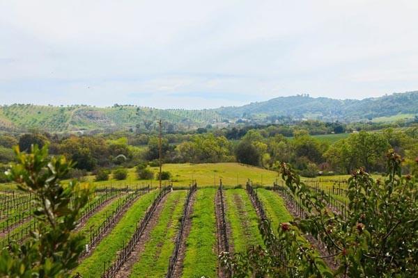 winery-600x400